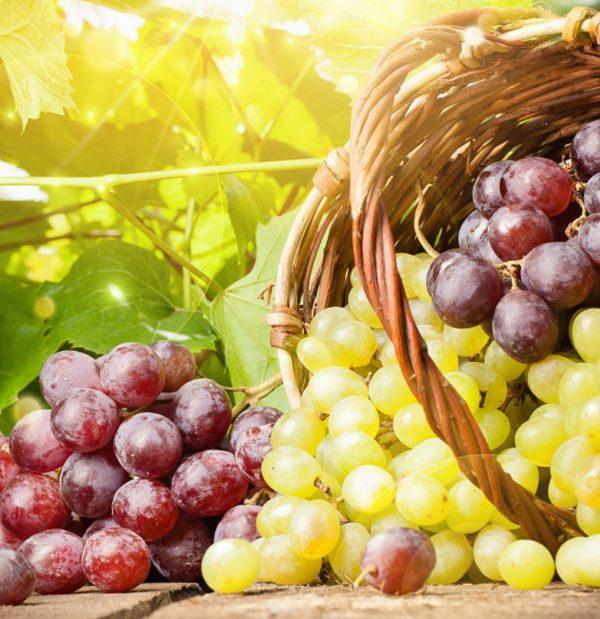 Festa dell'Uva a Casa Serena